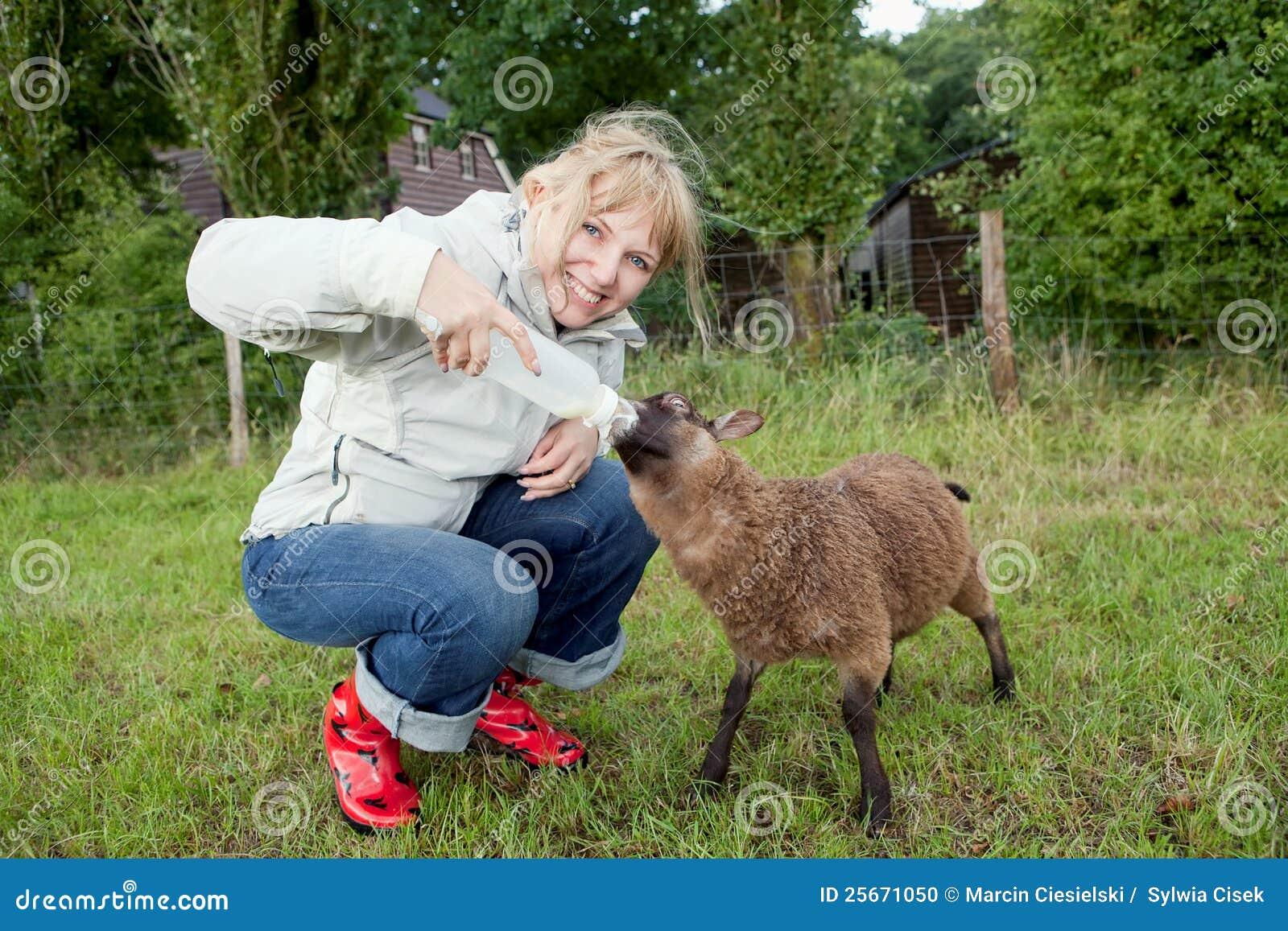 Mulher que alimenta carneiros novos