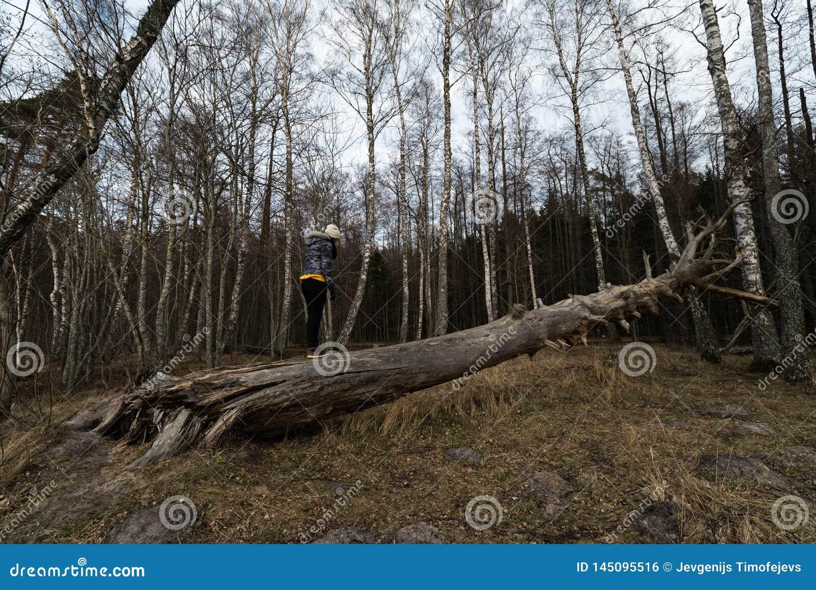 Mulher que escala em uma árvore caída em uma floresta na praia perto do mar Báltico