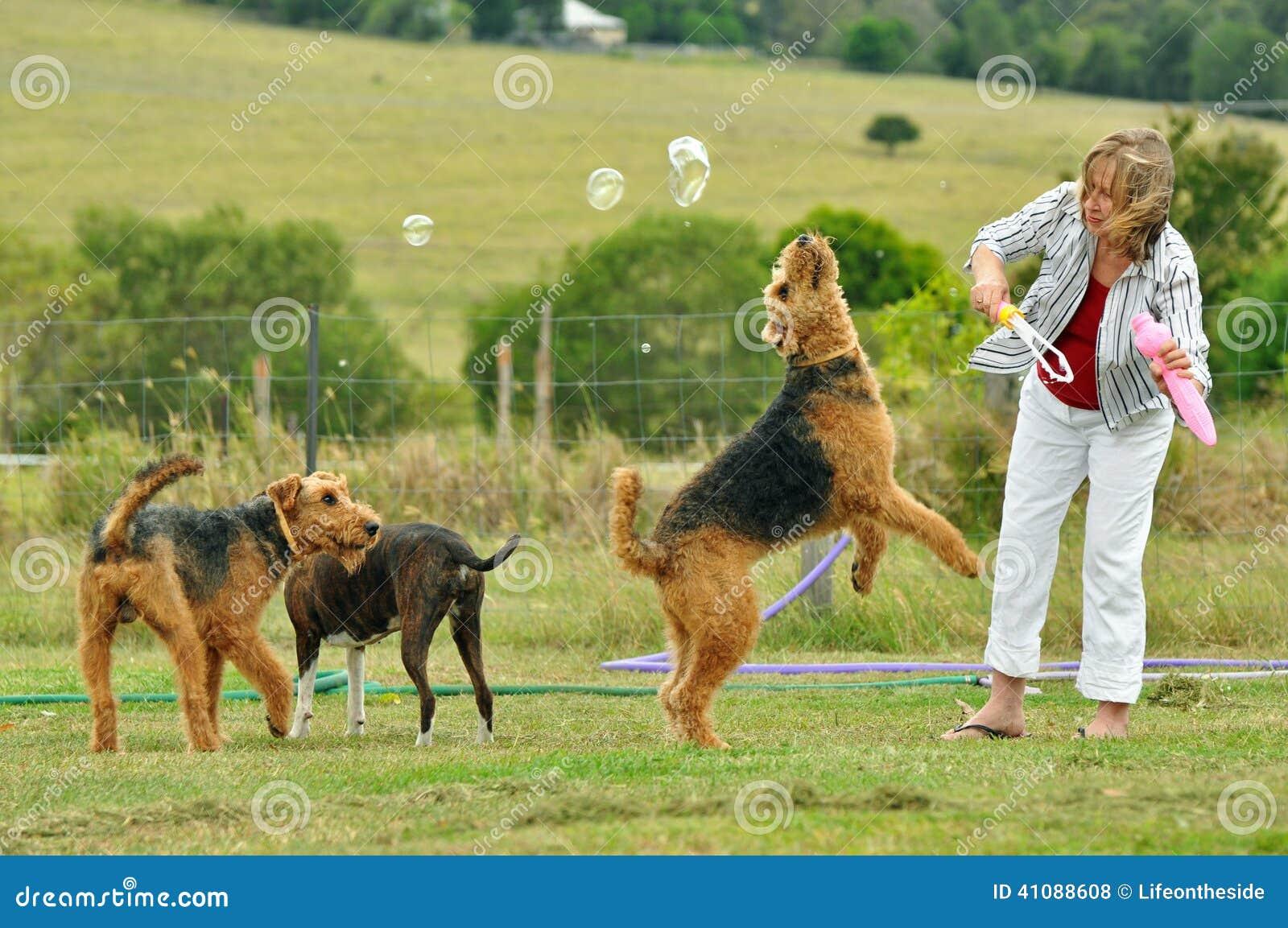 A mulher que joga com seu grande animal de estimação Airedale Terrier persegue fora