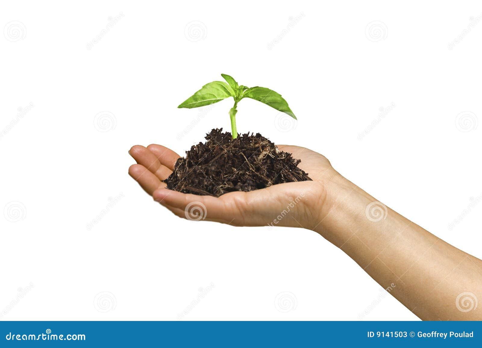 Mulher que prende uma planta crescente em sua mão