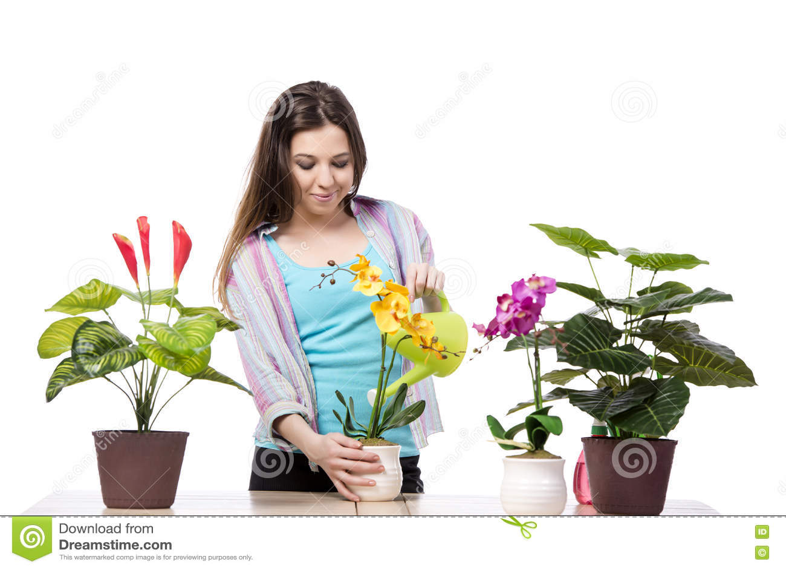 A mulher que toma da planta isolado no branco