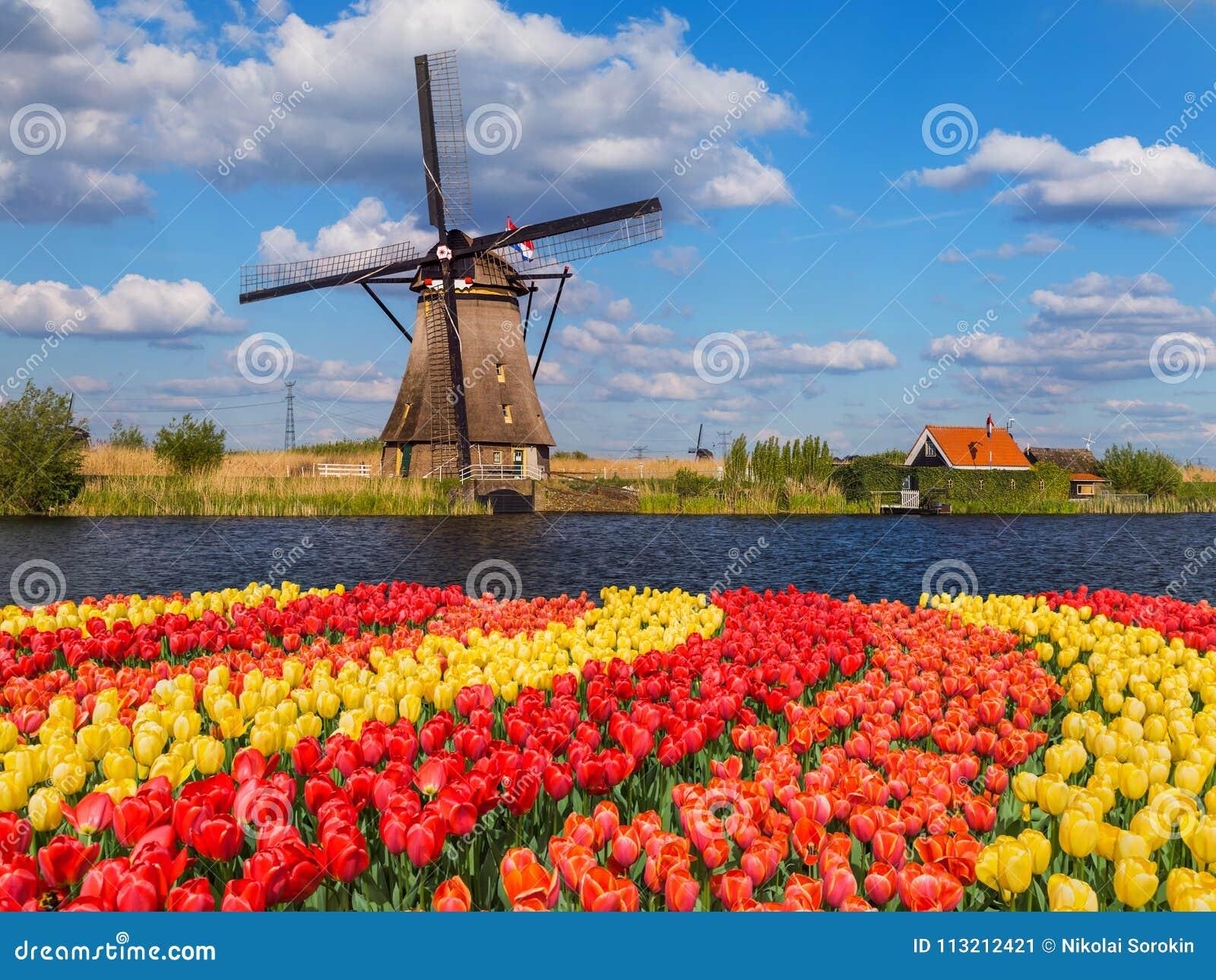 Mulini A Vento E Fiori Nei Paesi Bassi Immagine Stock Immagine Di