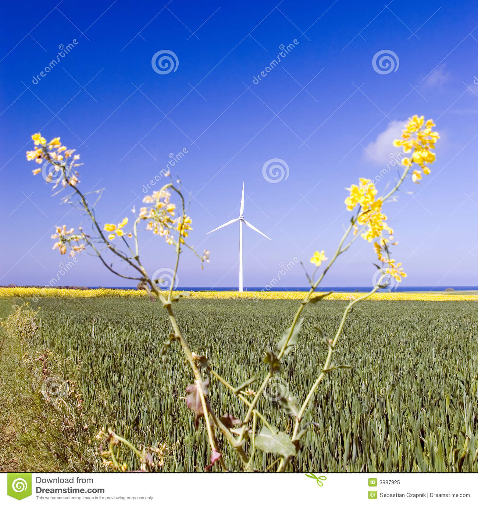 Mulino a vento e pianta della violenza