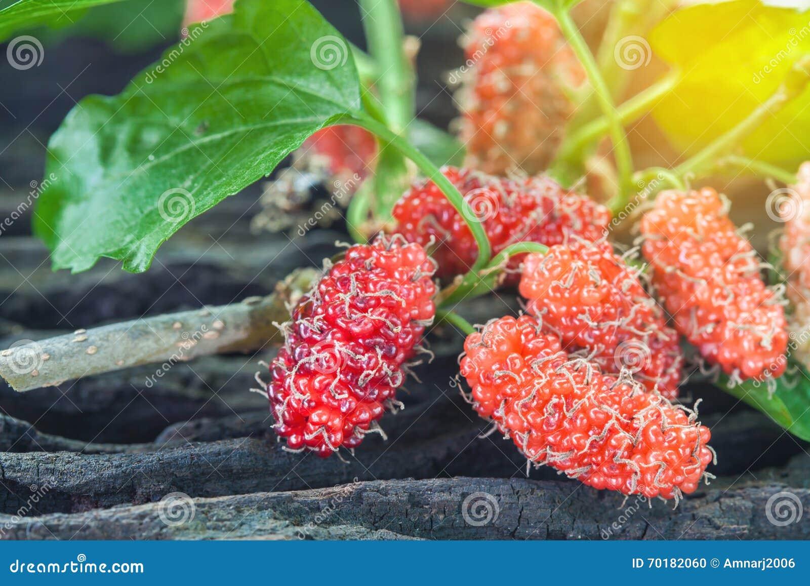 Mullbärsträdfrukt på träbakgrund selektivt