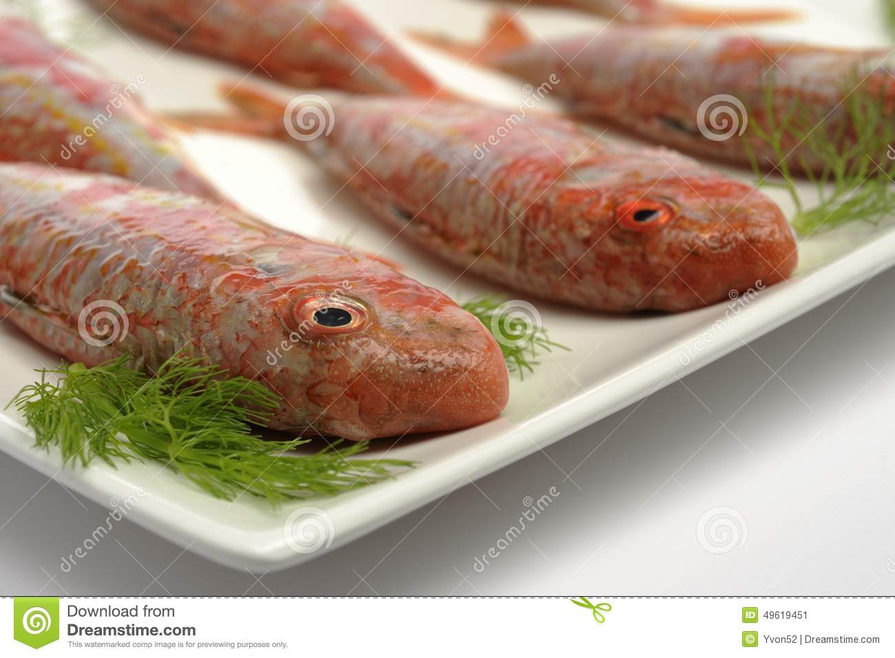 Mullet stock image image of diet restaurant healthy for Red fish catering