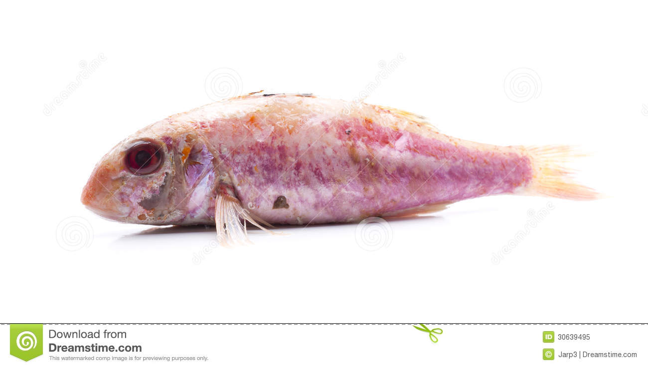 Mullet royalty free stock photo image 30639495 for Eating mullet fish