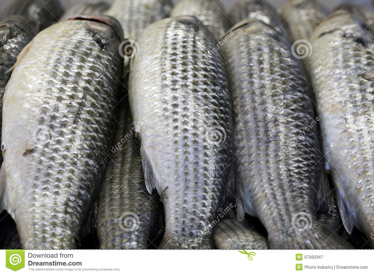 how to cook grey mullet fish