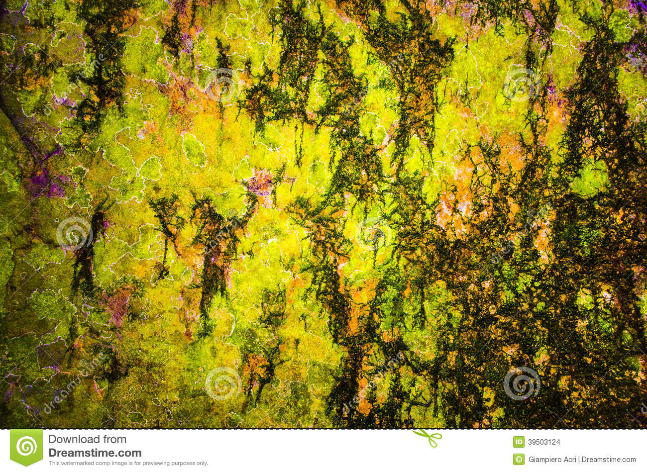 Multi color bark texture with abstract draws