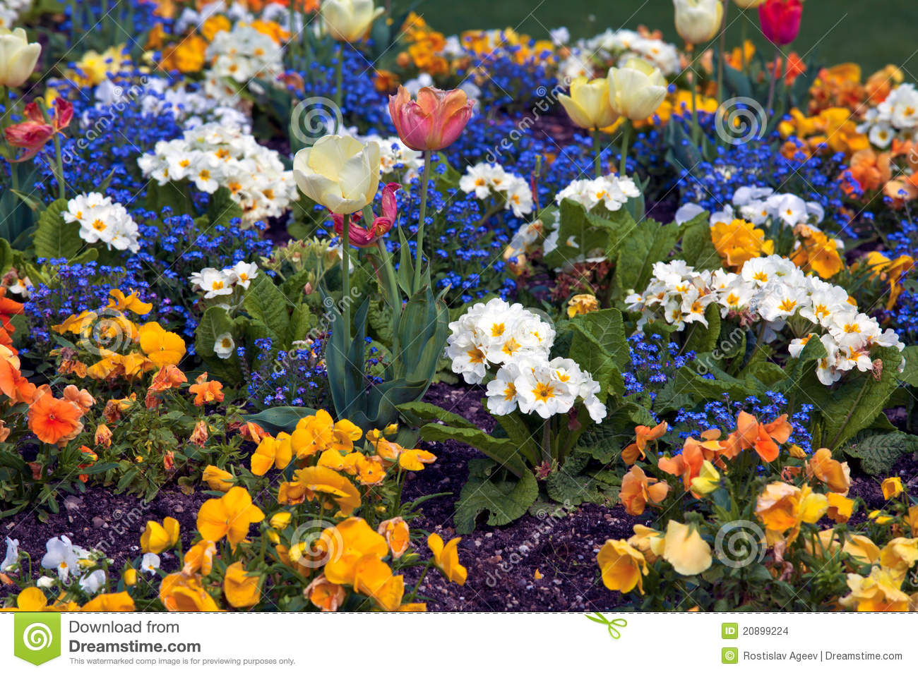 Multi-color Flowers Background Stock Photo - Image of ...