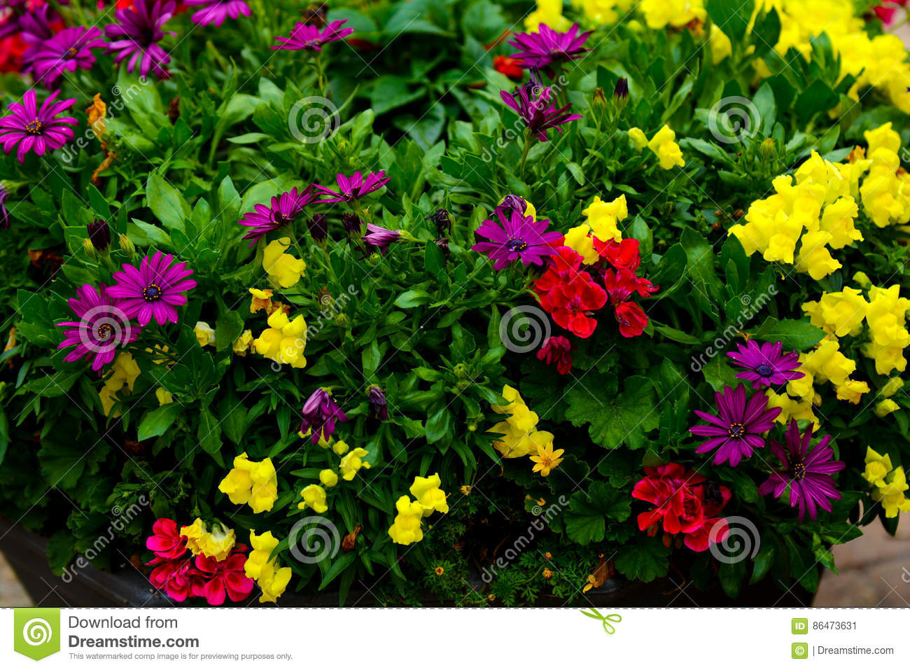Multi color flowers stock image. Image of yellow, color - 86473631