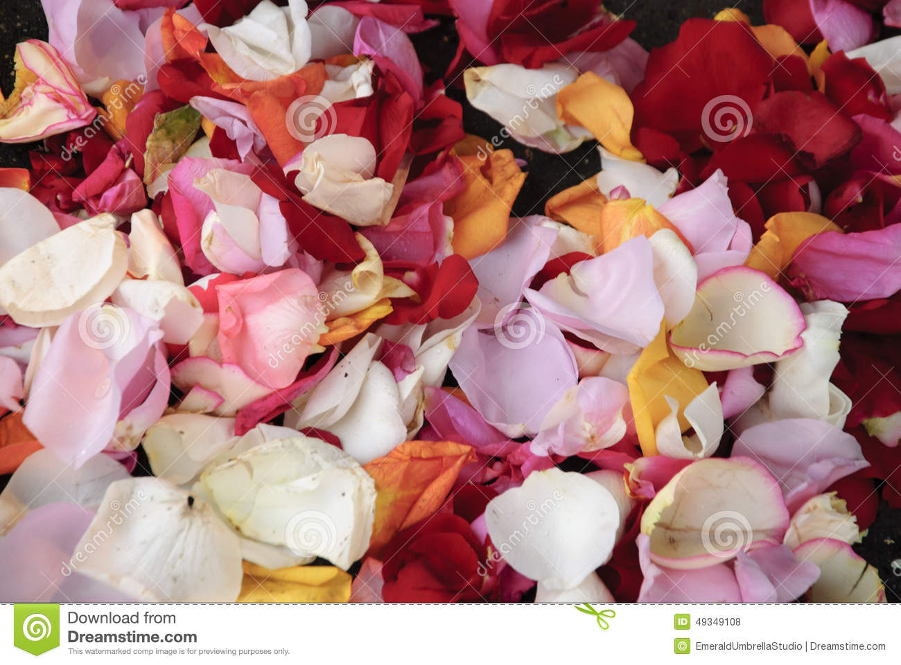 Multi color rose petal background stock photo image for Multi colored rose petals