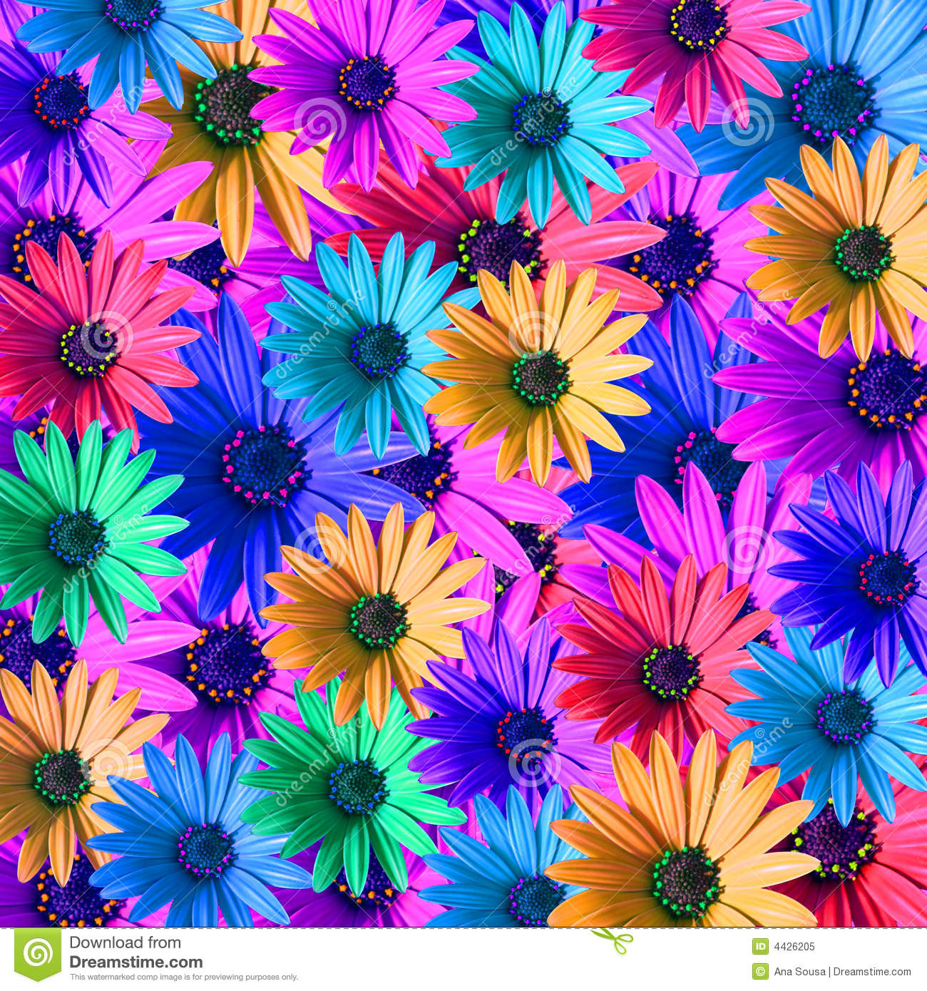 Multi Colored Daisy Flowers Stock Illustration