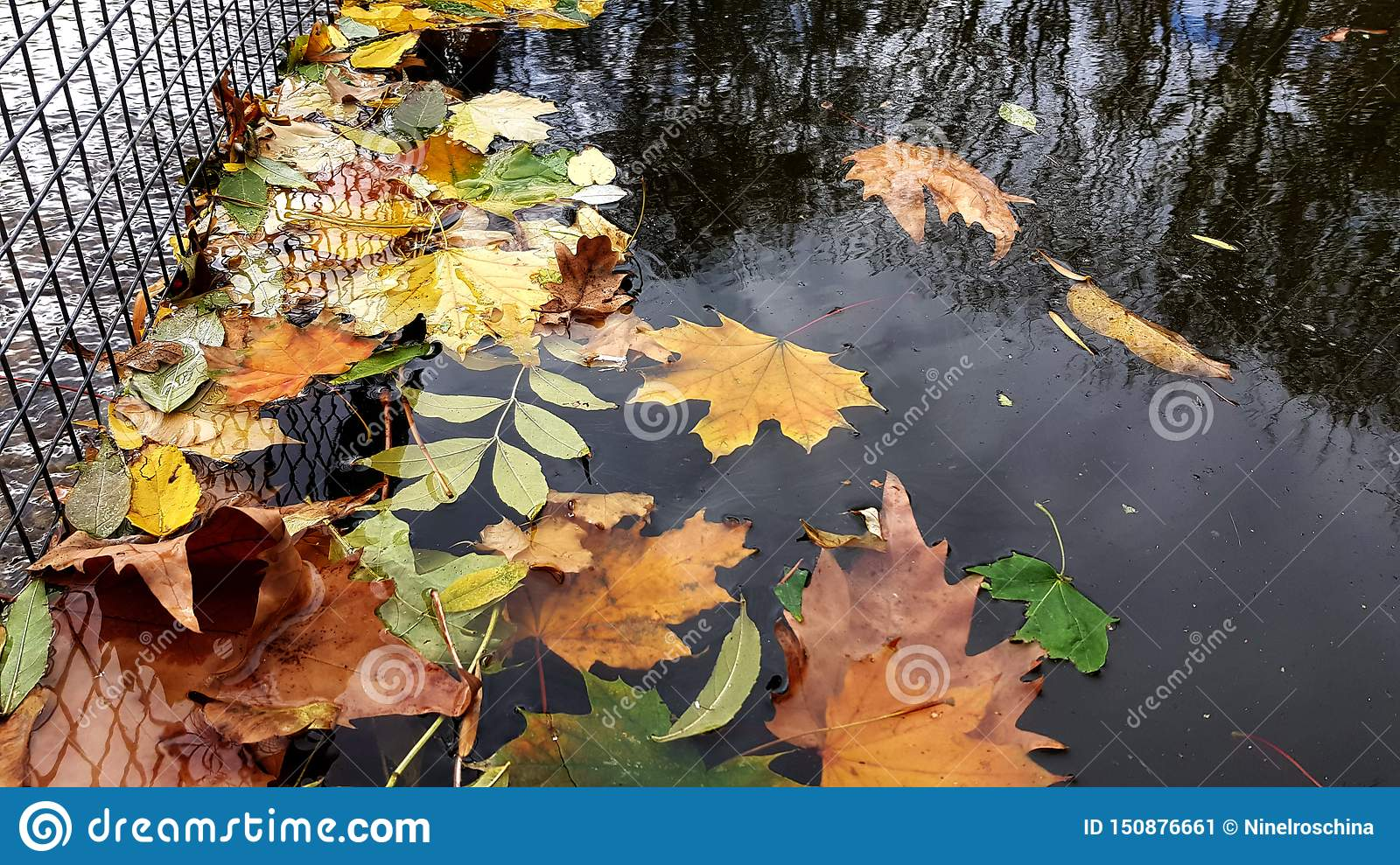 Multi colored fall leaves in water of pond in park