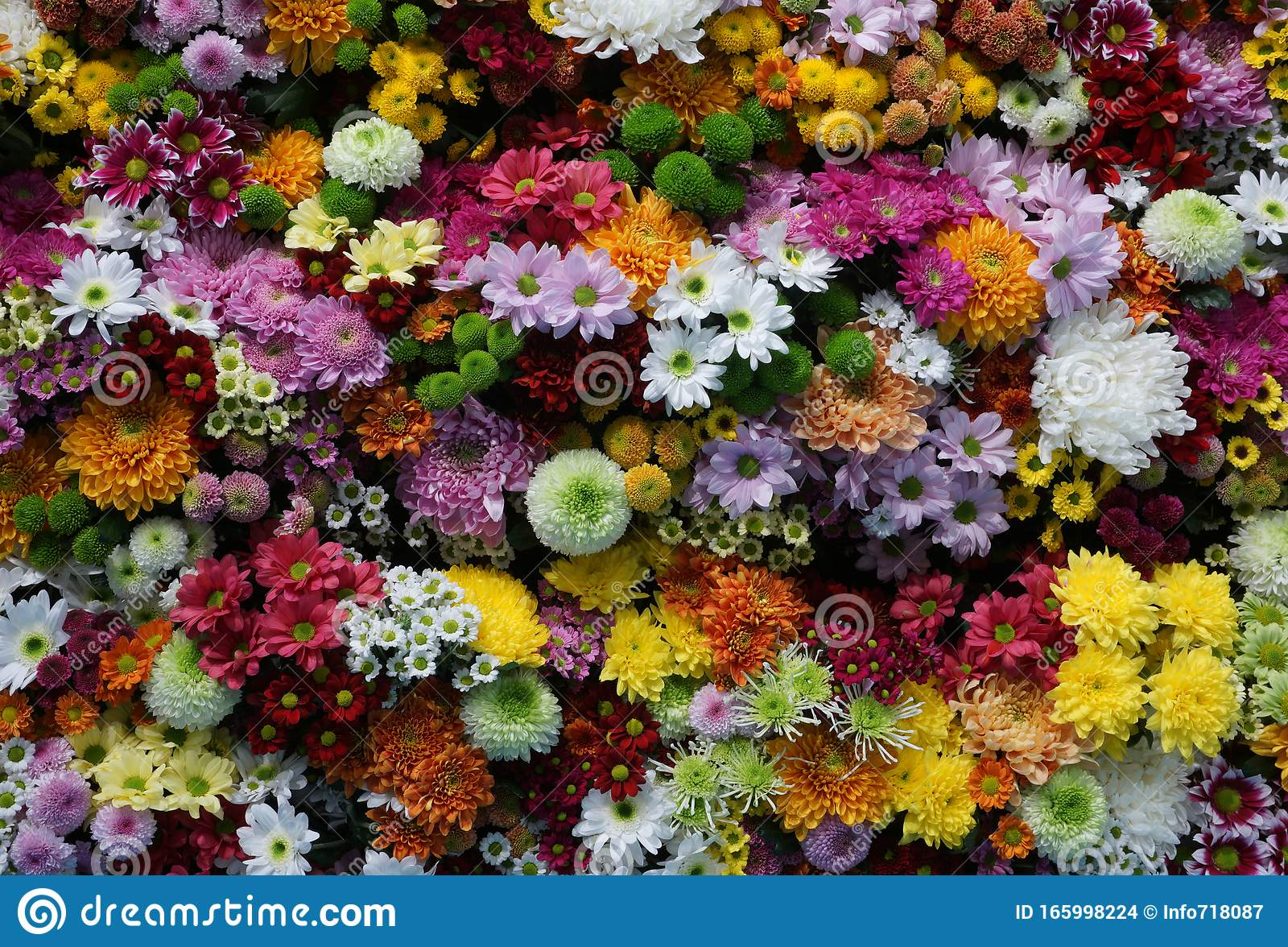 Multi Colored Flower Wall Background Wedding Decoration Close Up Of Colorful Real Flowers Wall Background Stock Photo Image Of Birthday Beauty 165998224