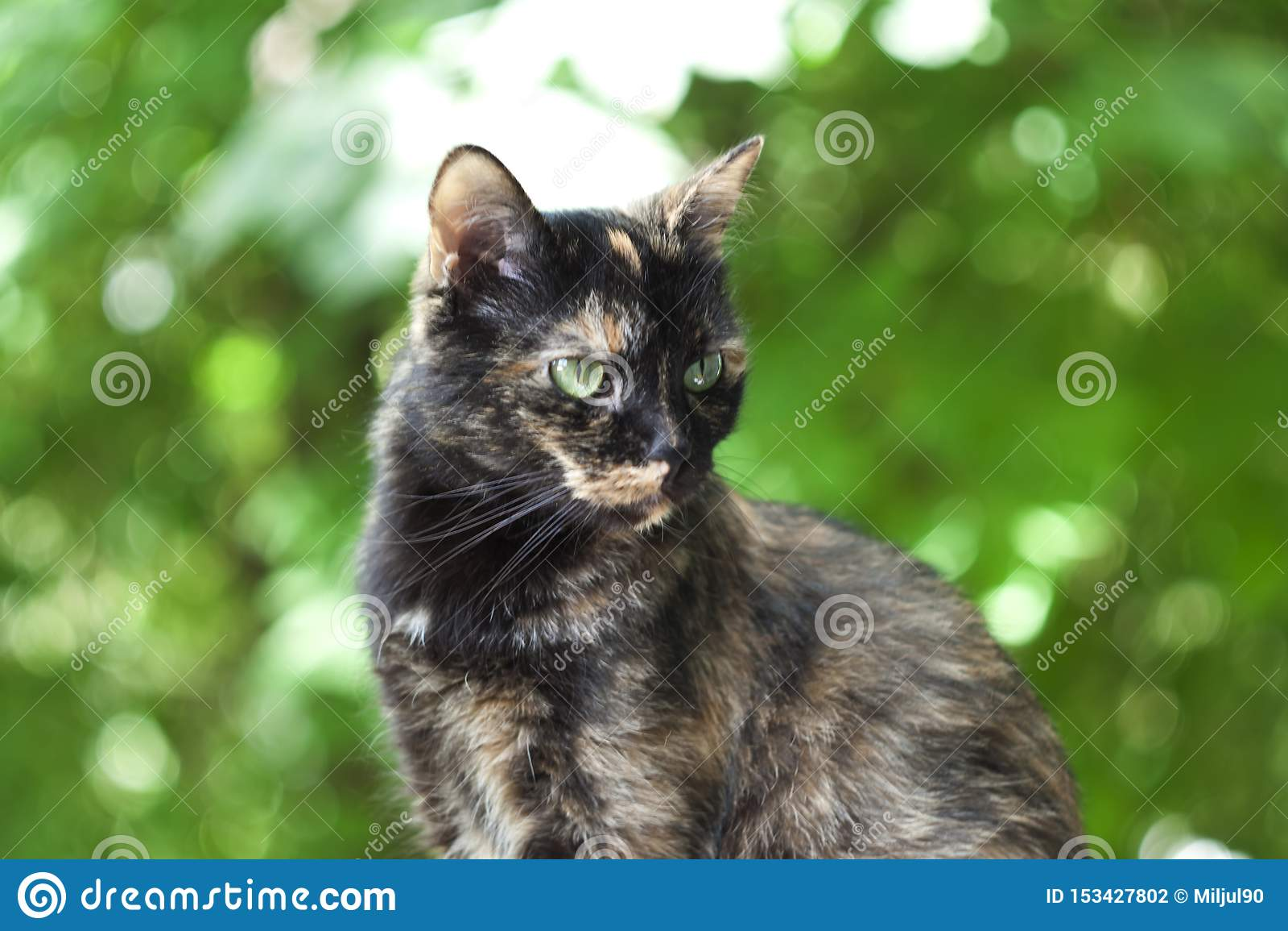 Multi-colored kat op een groene achtergrond