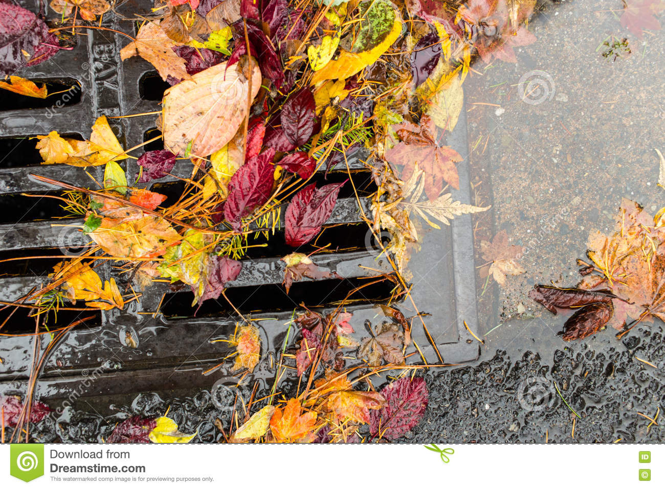 Multi colored leaves clogging a street drain