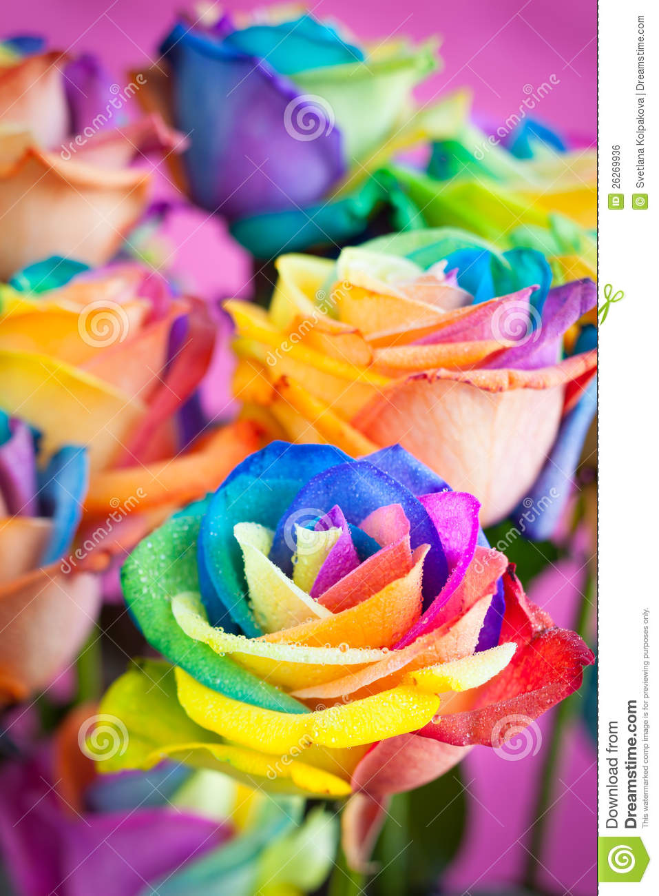 Multi colored roses royalty free stock image image 26269936 for Pictures of multi colored roses