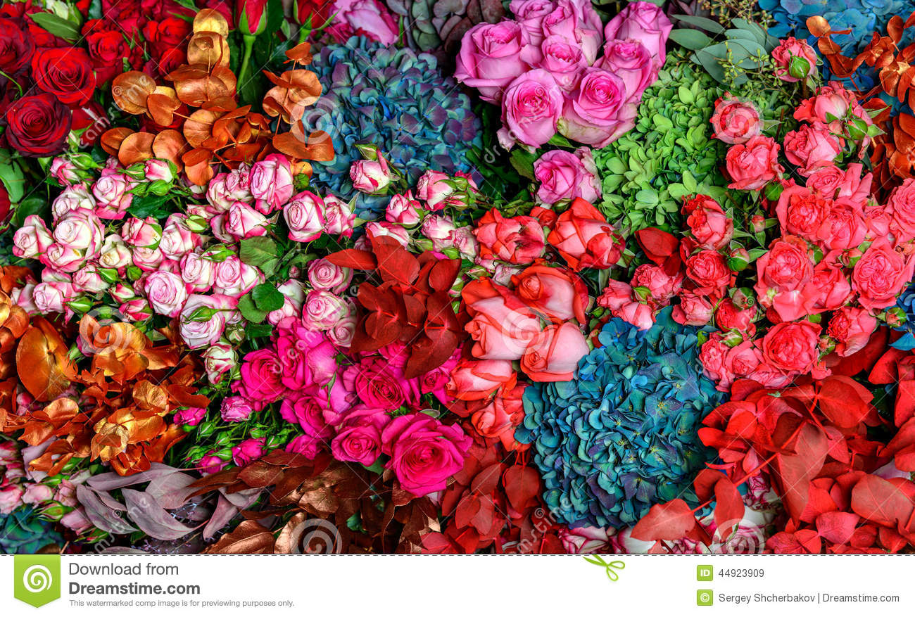 Multi colored roses stock photo image 44923909 for Pictures of multi colored roses