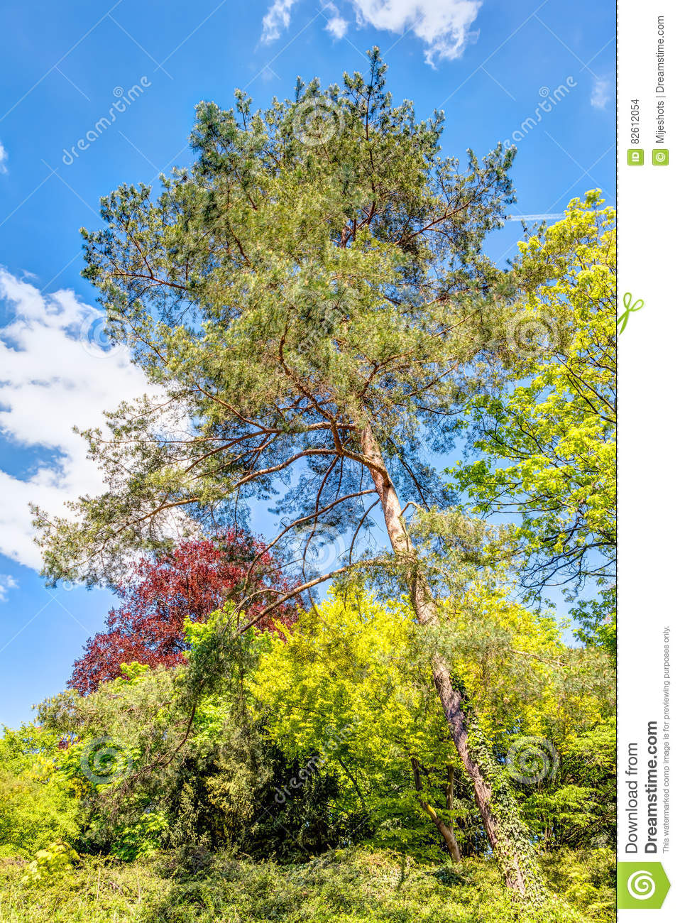 Multi colored trees stock photo. Image of tranquil, landscape - 82612054