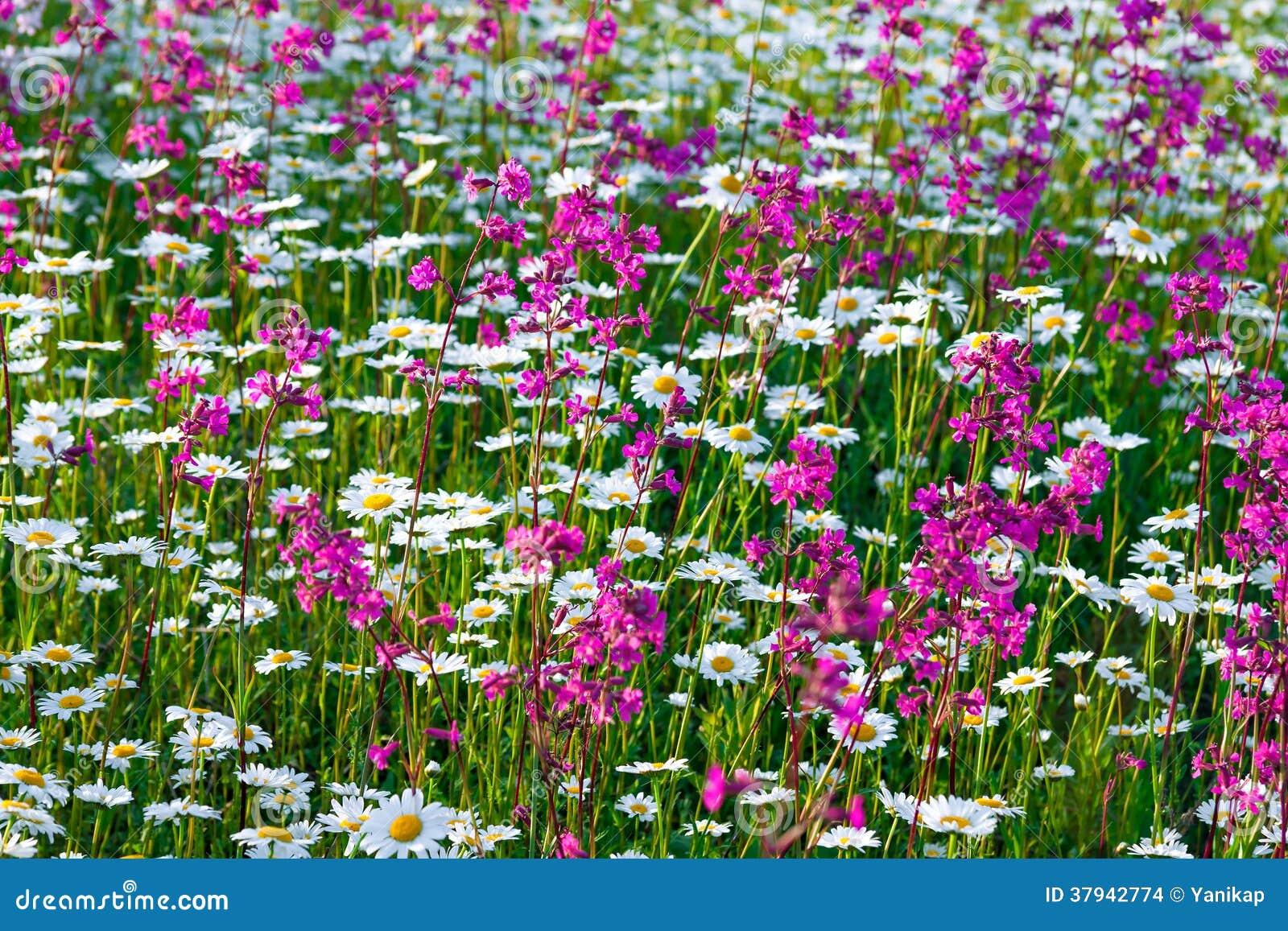 Multi fiori colorati che sbocciano su un prato immagini for Fiori che sbocciano