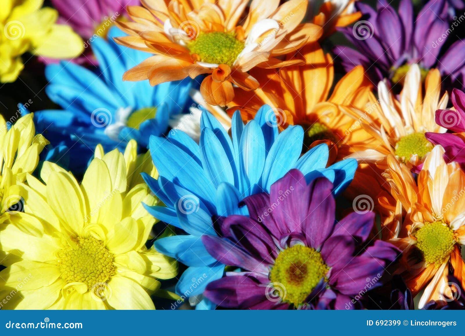 Multicolor bakgrundstusensköna