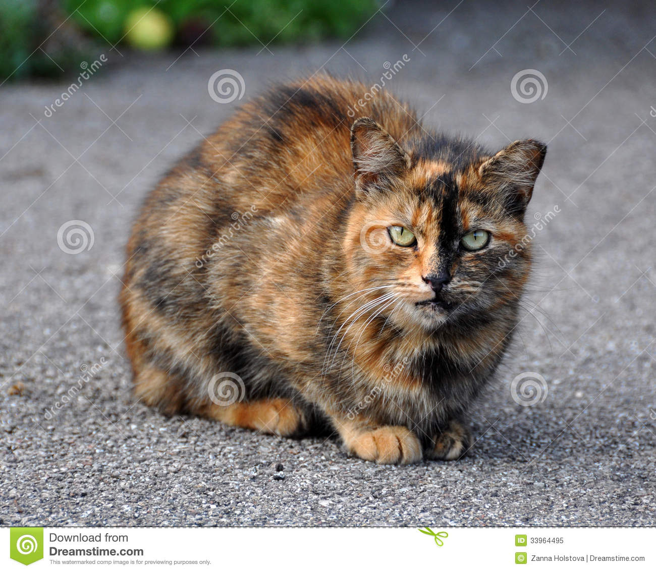 multicolor cat royalty free stock photo image 33964495 fat cat clip art free fat cat clipart free