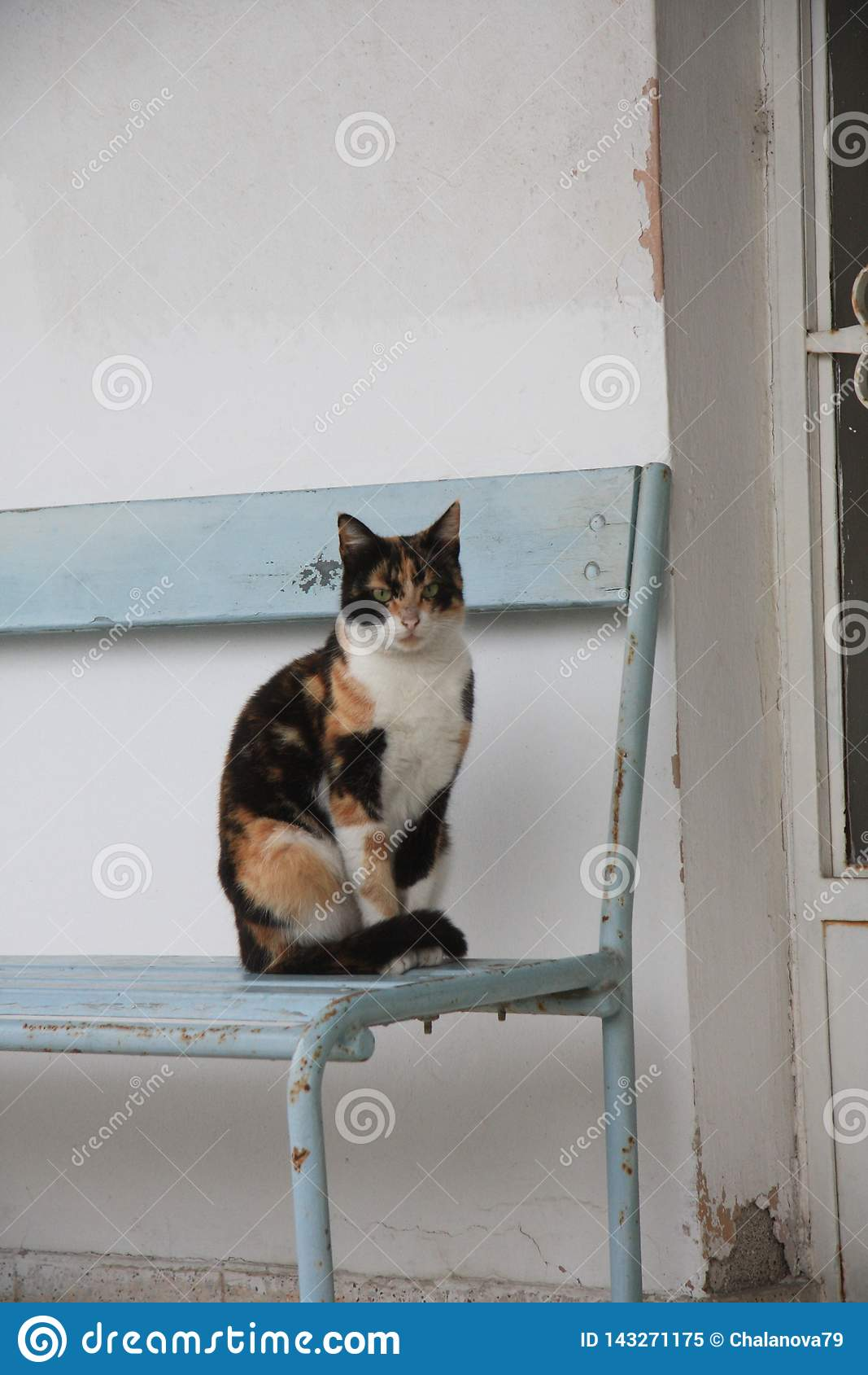 Cat standing on the chair outside the house