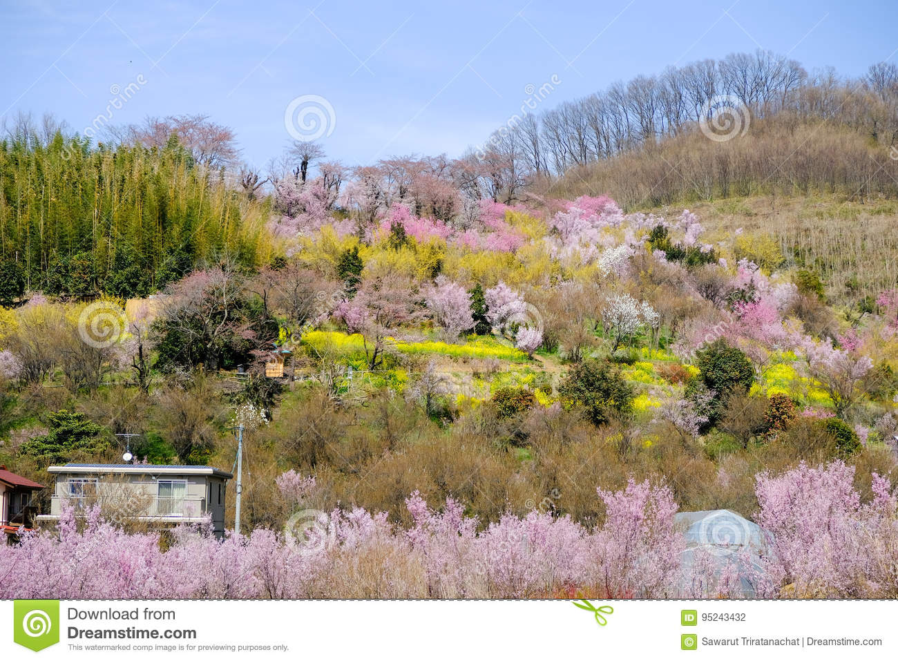 Multicolor flowering trees covering hillside ,Hanamiyama Park,Fukushima,Tohoku,Japan.