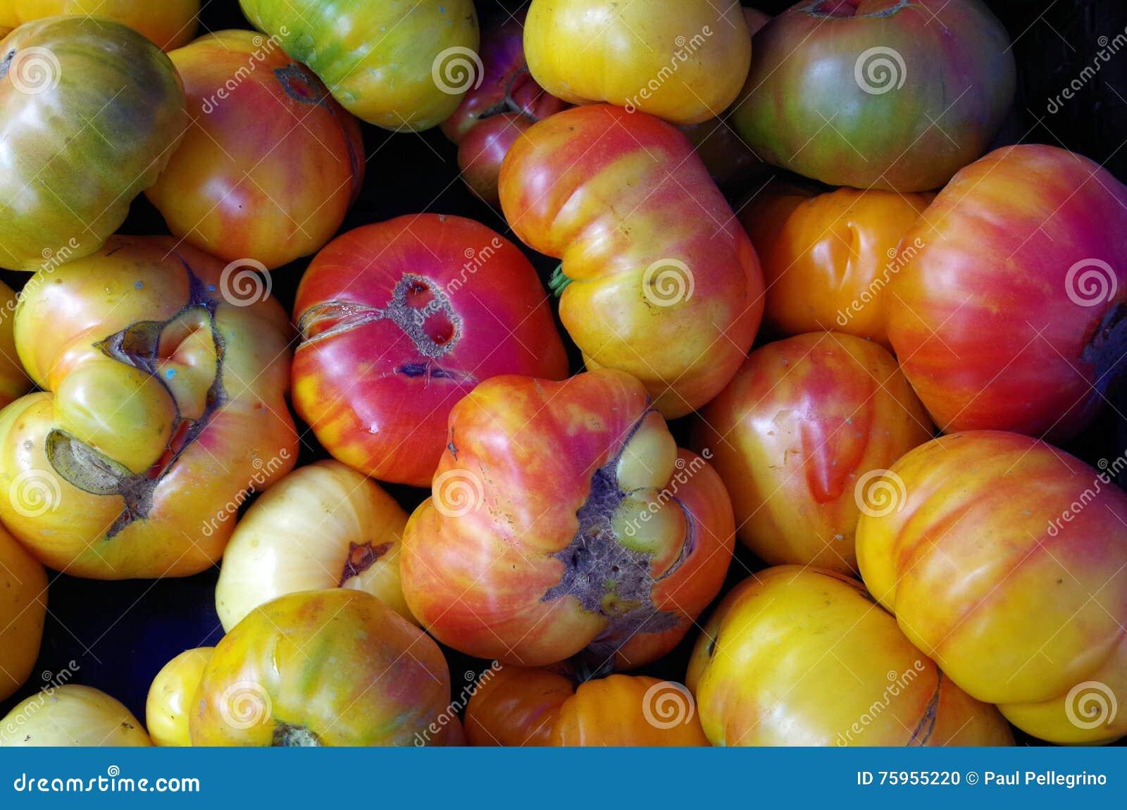 Multicolor heirloom pomidory