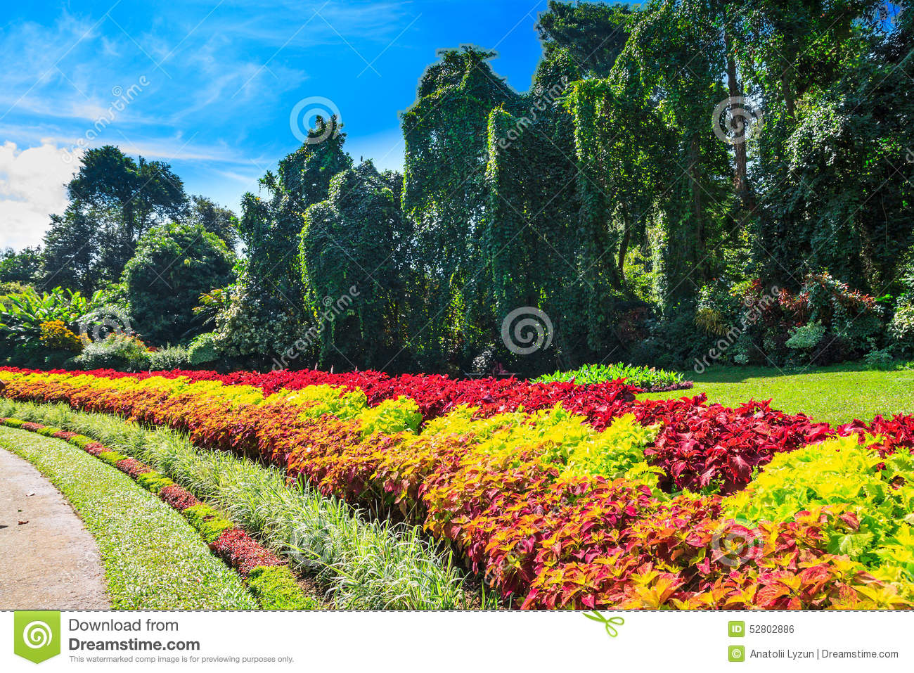 Multicolored Alley Of Flowers And Trees Stock Photo - Image of ...