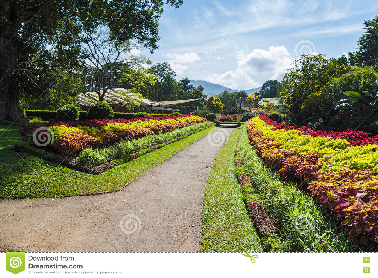 Multicolored Alley Of Trees And Flowers . Royal Botanic Gardens ...