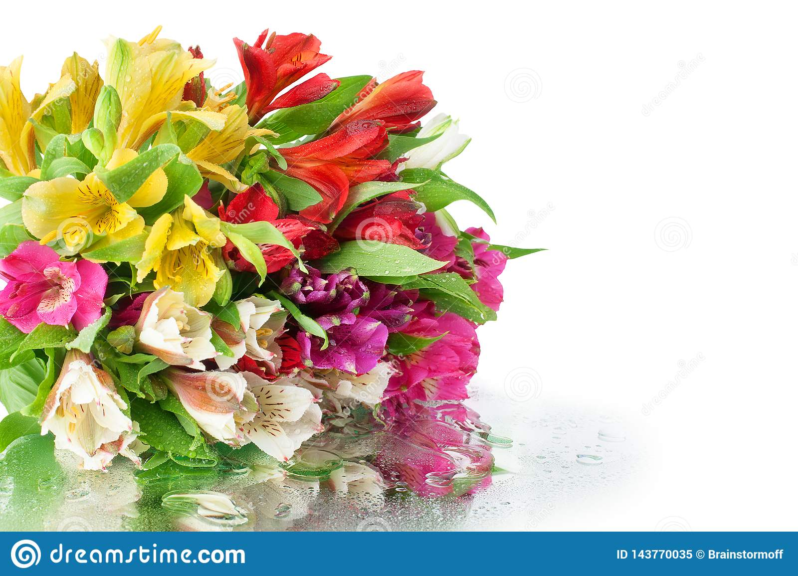 Multicolored alstroemeria flowers bouquet on white mirror background in water drops isolated close up