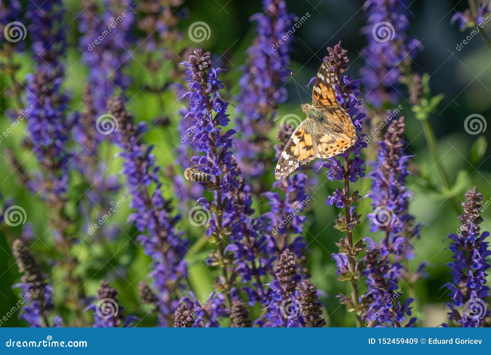 Multicolored bloemen op groene weide in bos Vliegende bijen en vlinders vult de schoonheid en de diversiteit van aard aan