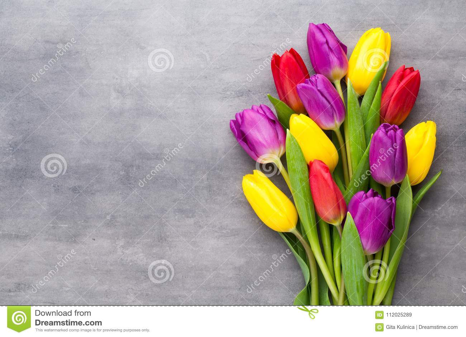Multicolored de lentebloemen, tulp op een grijze achtergrond