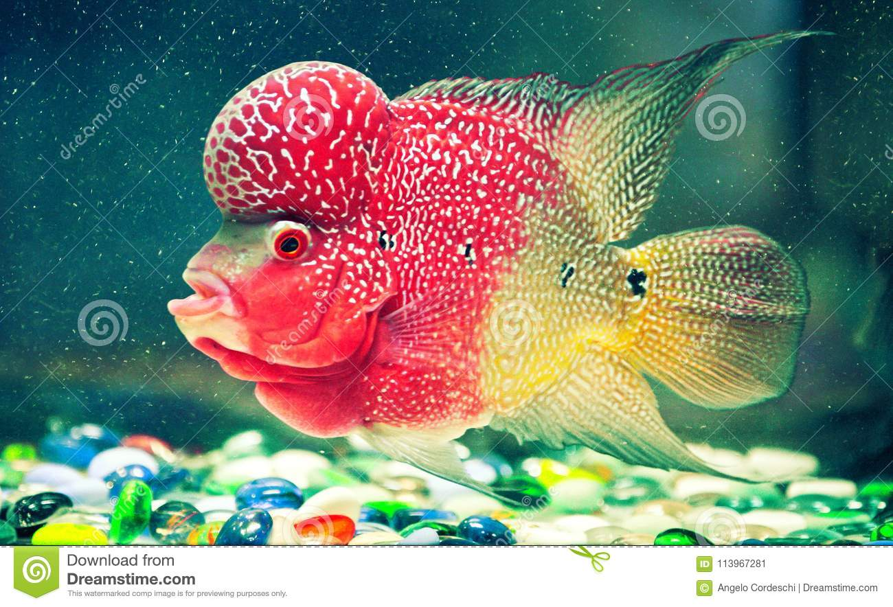 Multicolored Fish With Strange Shapes In An Aquarium Stock Image ...