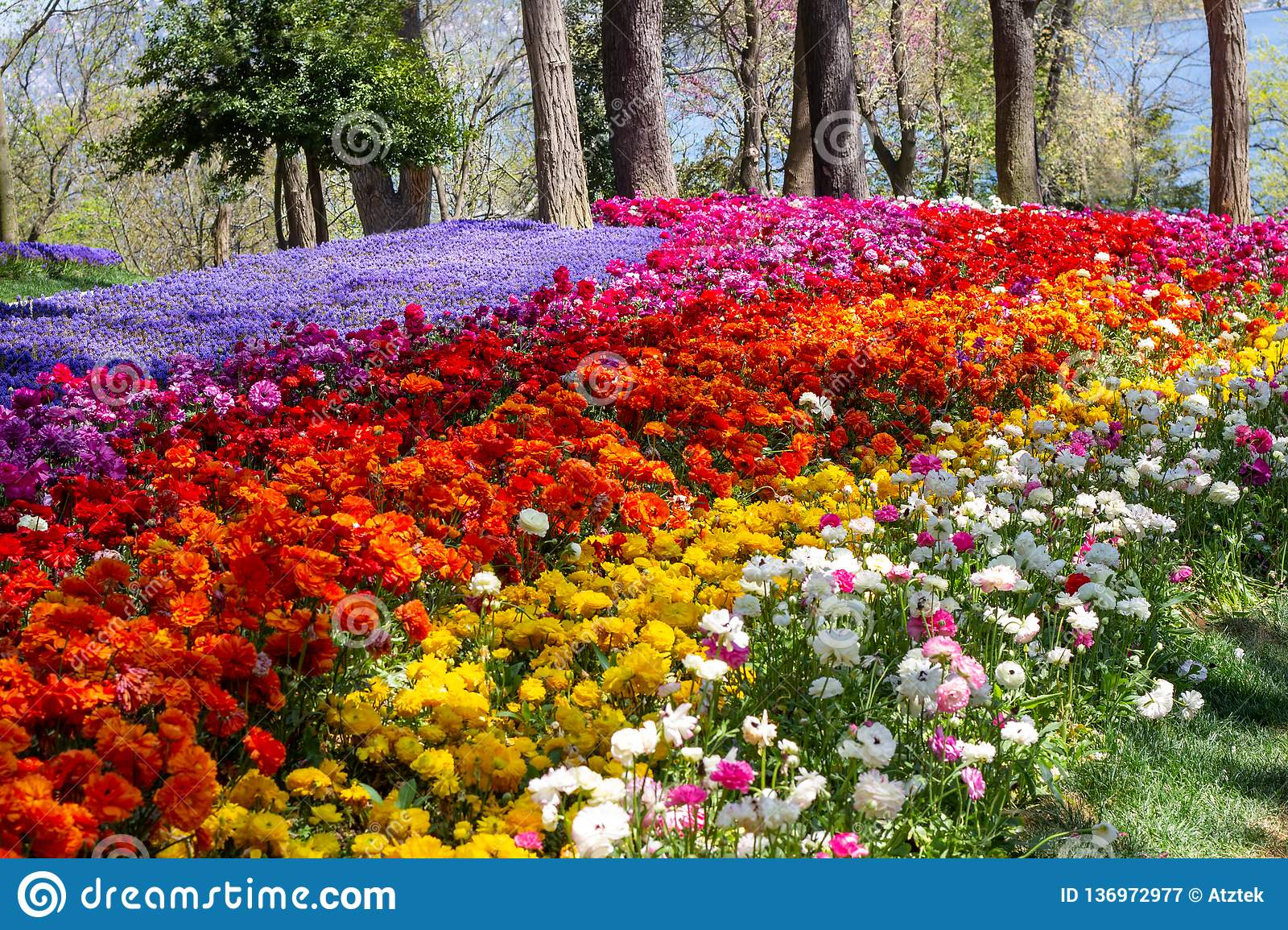 Multicolored flowers in Emirgan Park at the Tulip Festival in Istanbul, a bright colorful spring background
