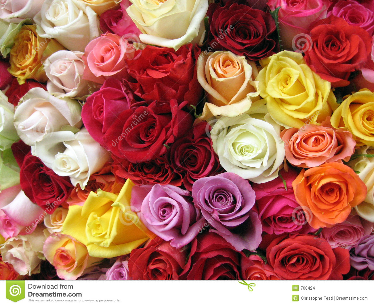Multicolored Roses Stock Images - Image: 708424