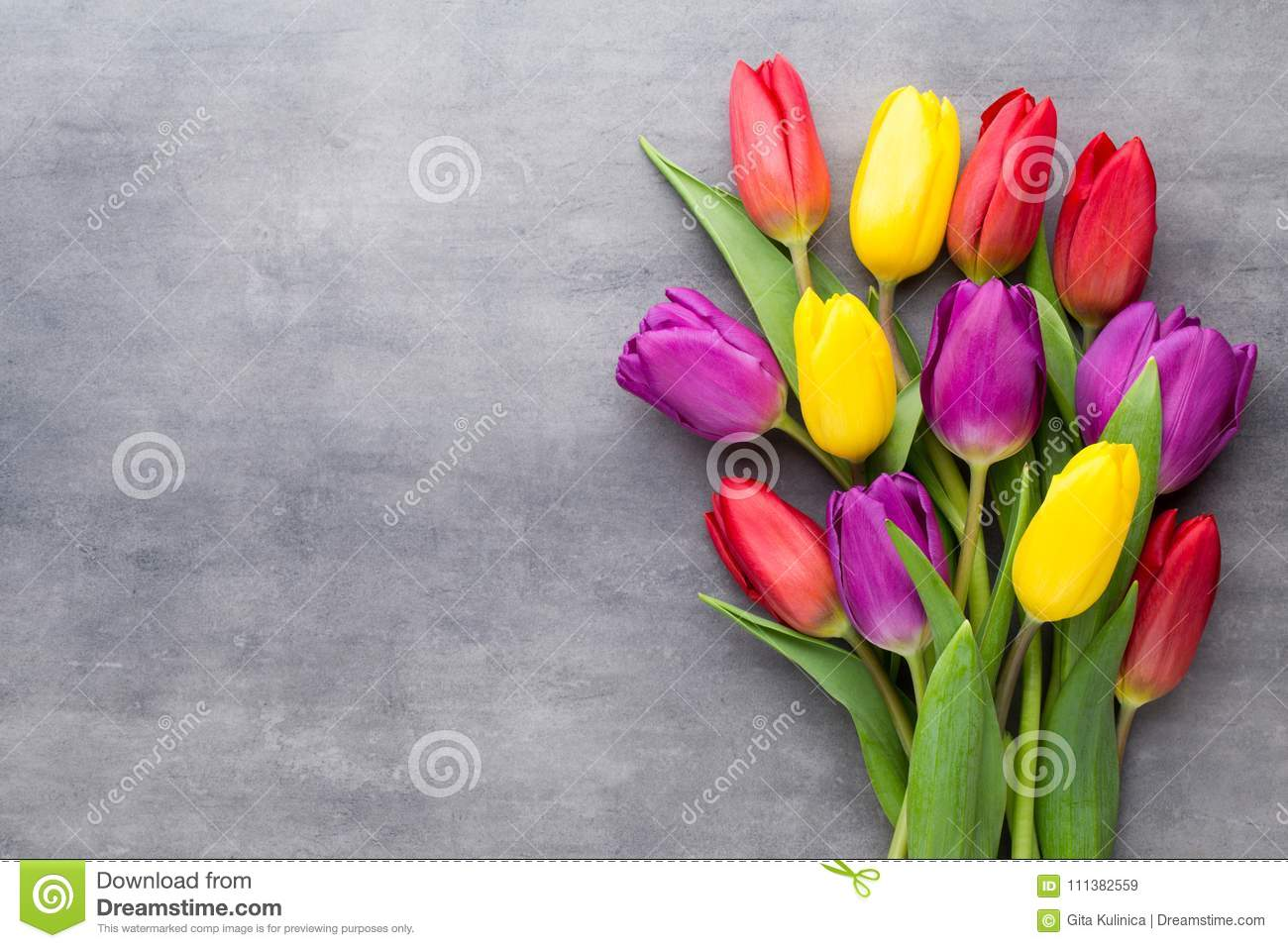Multicolored spring flowers tulip on a gray background stock image download comp mightylinksfo