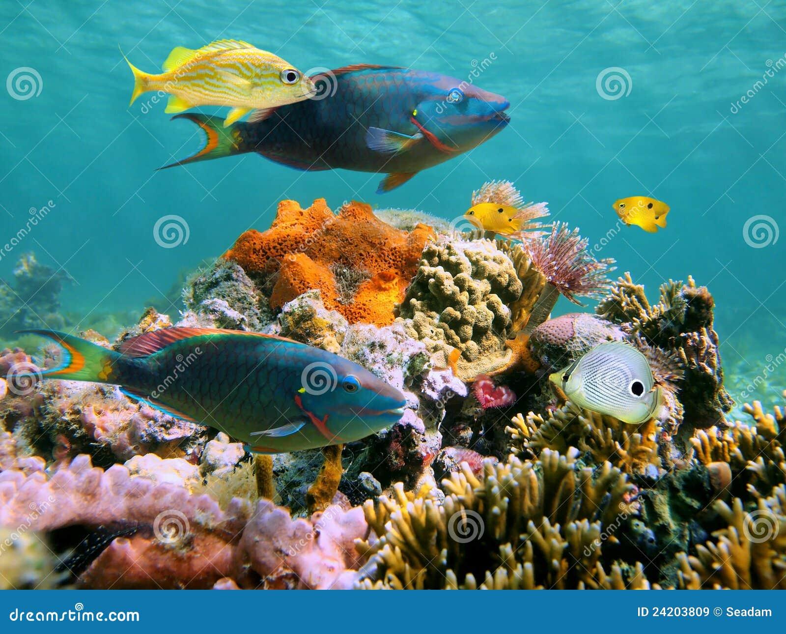 Multicolored Underwater Sealife Stock Image