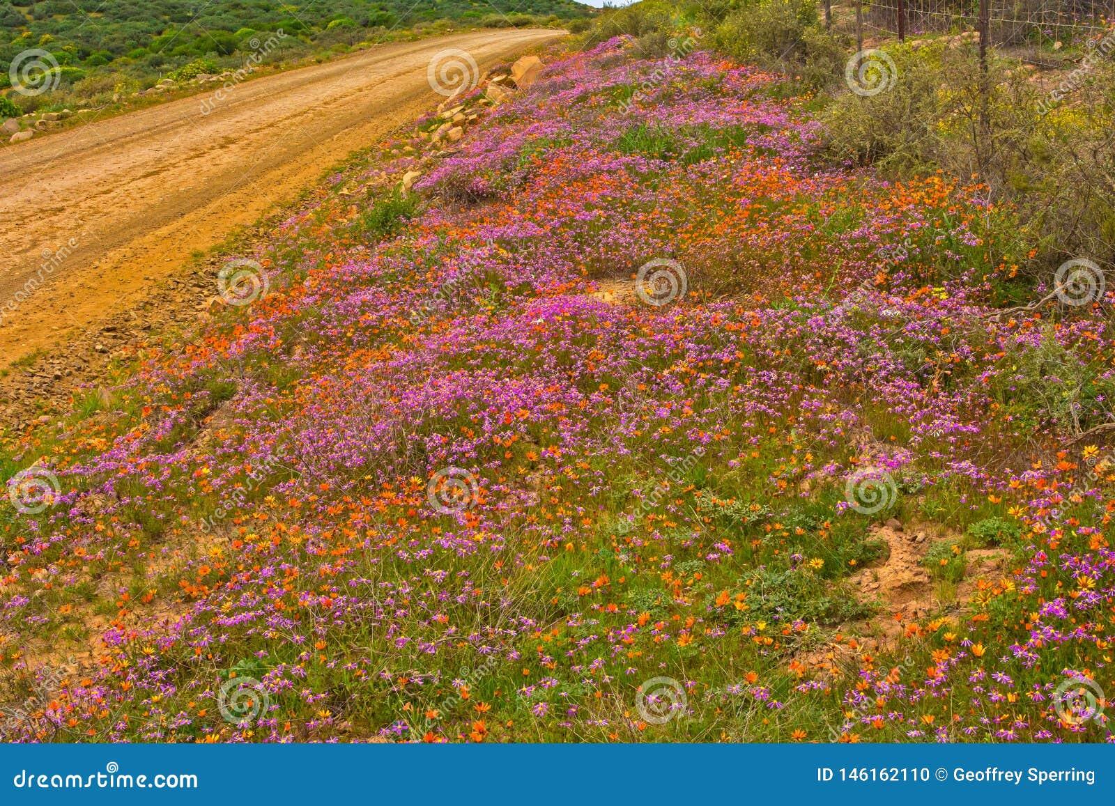 Multicoloured madeliefjewildflowers langs landweg