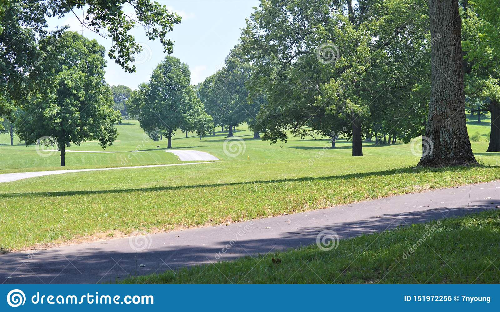 Multiple Paved Paths Passing Through a Green Field with Multiple Tall Trees