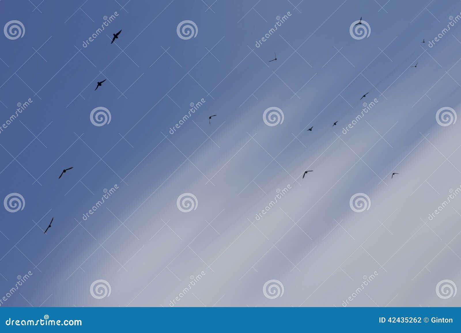 Multitud del vuelo de pájaros