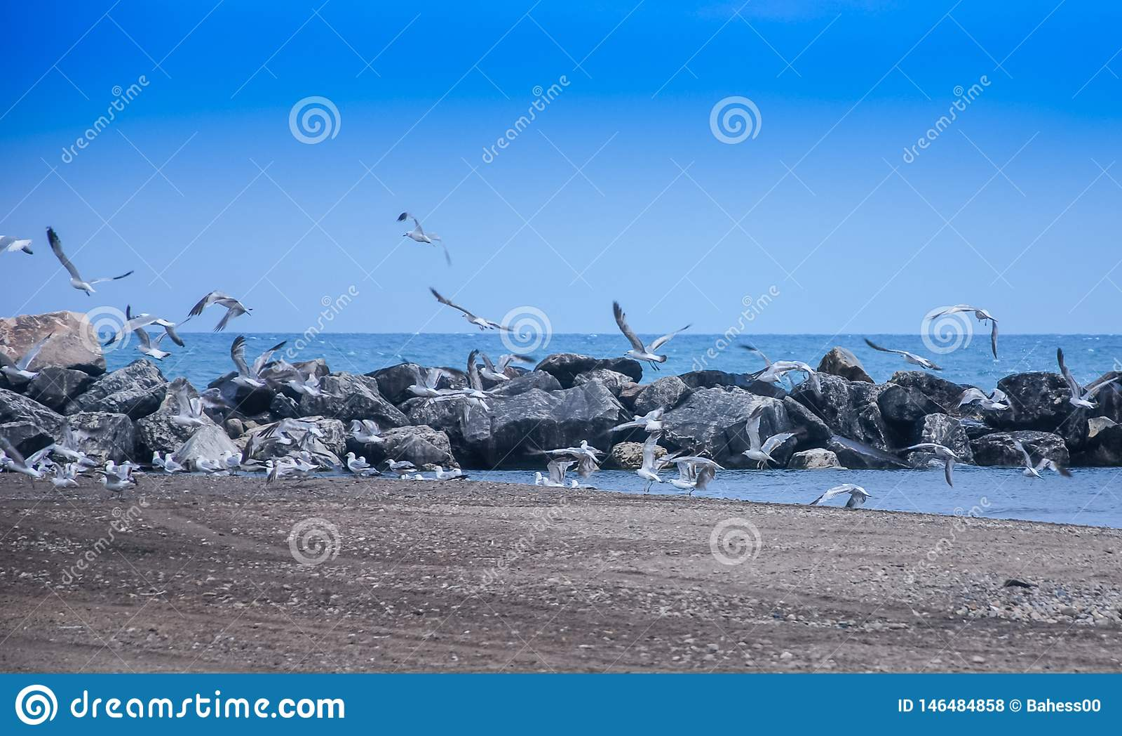 Multitud que vuela de las gaviotas el lago Michigan