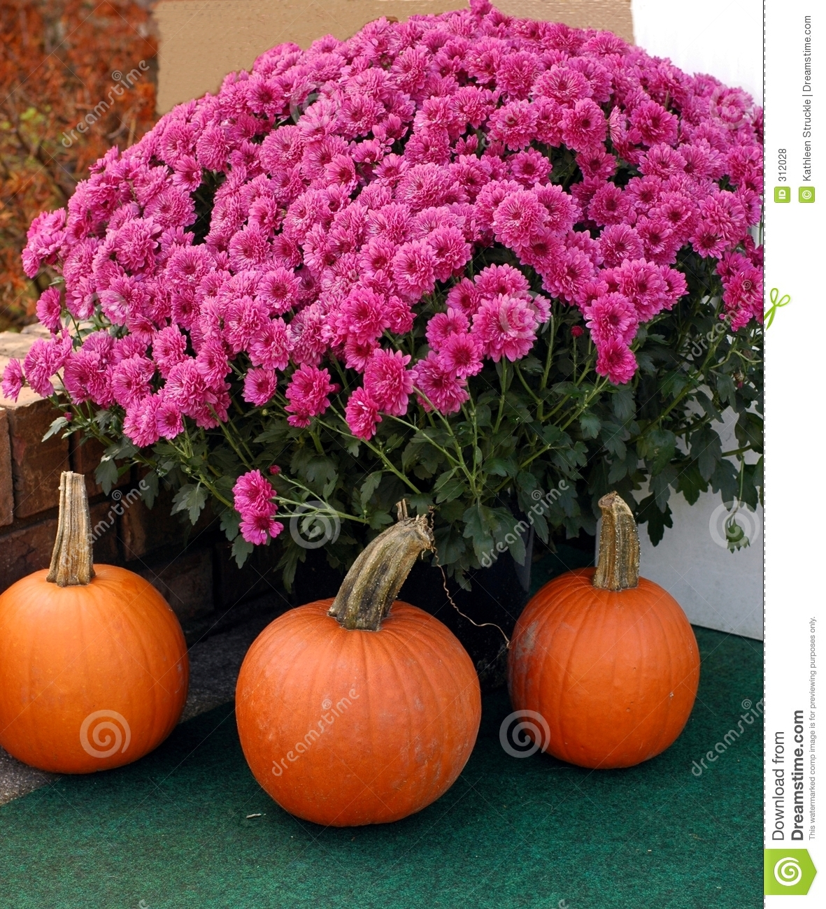 Mums And Pumpkins Royalty Free Stock Photos Image 312028