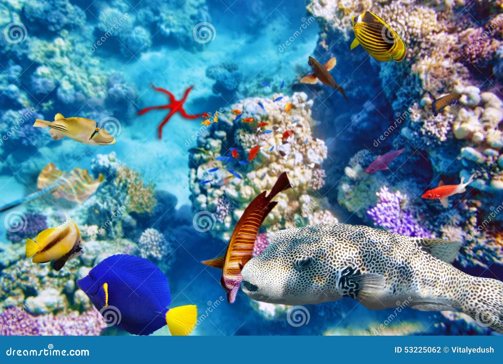 Mundo subacuático con los corales y los pescados tropicales
