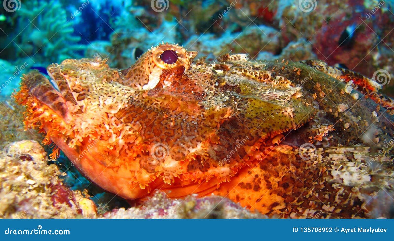 Mundo subacuático en agua profunda en flora de las flores del arrecife de coral y de las plantas en fauna del mundo azul, pescado