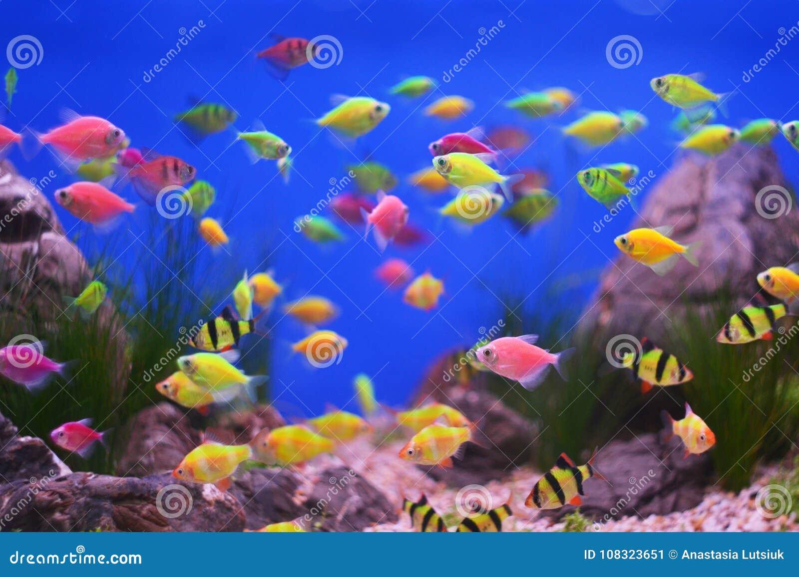 Mundo subaquático colorido, peixes do aquário