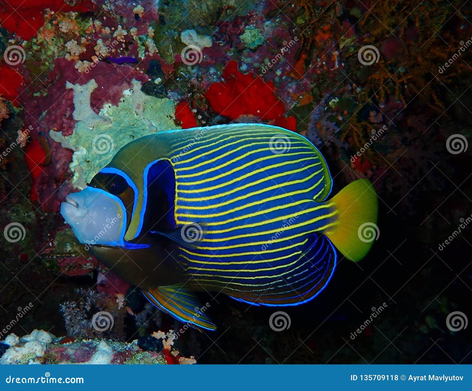 Mundo subaquático nas águas profundas na flora das flores do recife de corais e das plantas em animais selvagens do mundo azul, e