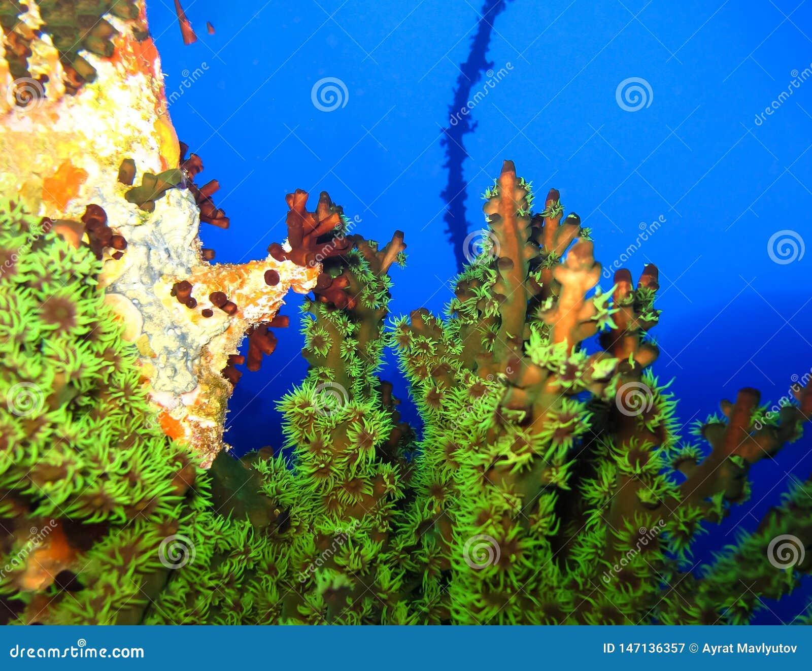 Mundo subaqu?tico nas ?guas profundas na flora das flores do recife de corais e das plantas em animais selvagens marinhos do mund