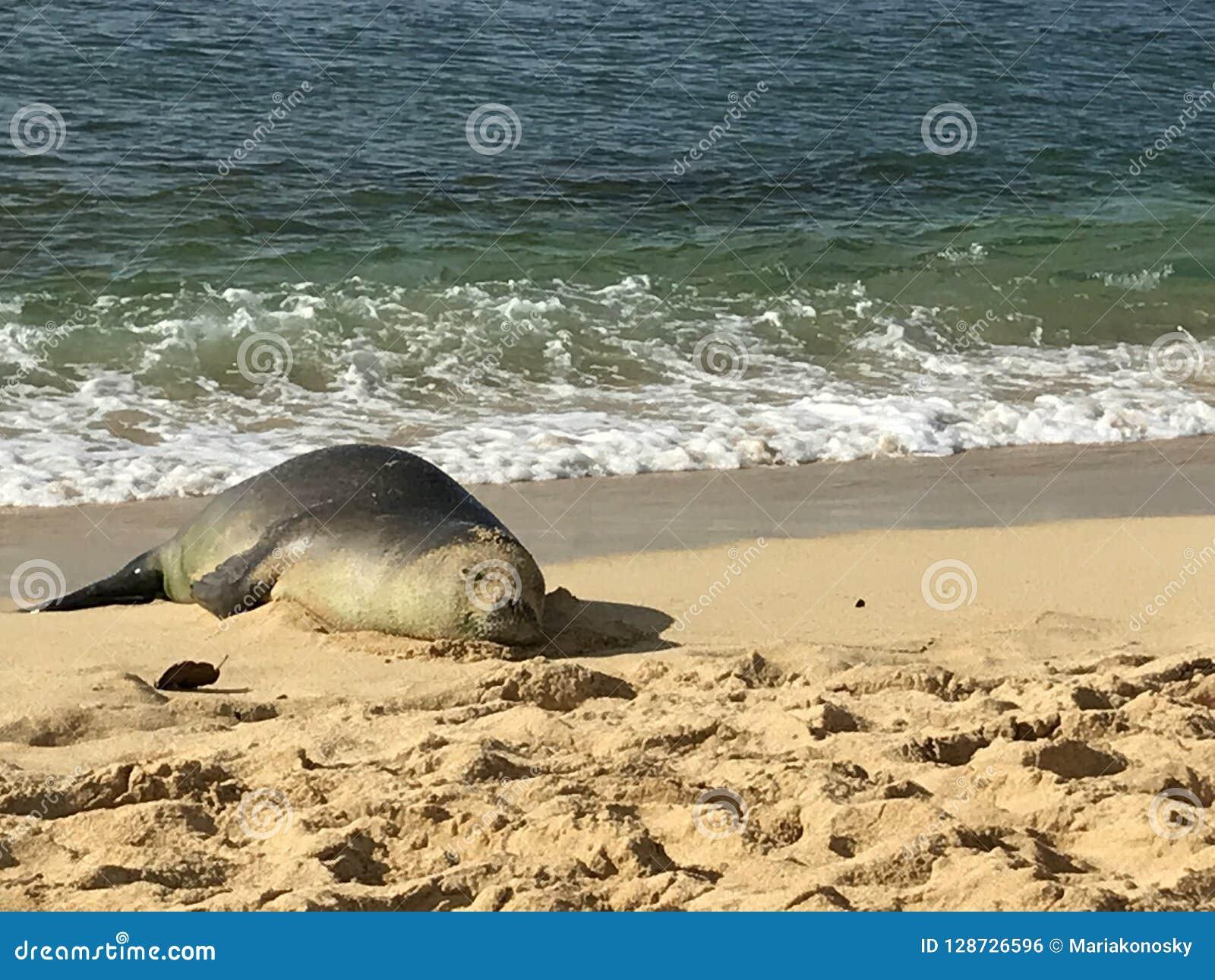 Munk Seal Takes ett avbrott
